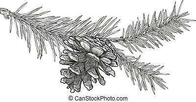 Hand gezeichneter Fir Baumzweig mit Kegel, isoliert auf weißem Hintergrund.