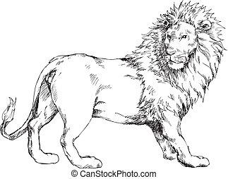 Hand gezeichneter Löwe