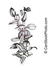 Hand gezeichneter Zweig mit Blättern isoliert auf weißem Hintergrund.