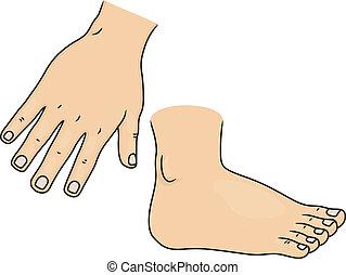 Hand und Fuß Körperteile