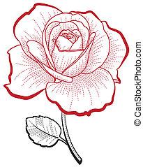 Handzeichnung Rose.