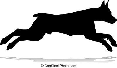 haustier, hund, silhouette, tier