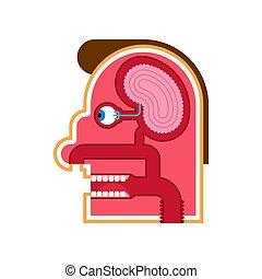 Head Anatomie Cartoon internen Schema. Gehirn und Auge. Geschmacksknospen. Schädelschnitt