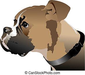 head., boxer, vektor, hund, abbildung