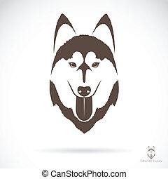 heiser, bild, vektor, hund, sibirisch