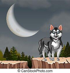 heiser, felsformation, wolf, hund, nacht