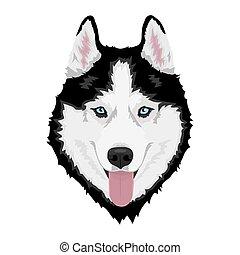 heiser, sibirisch, hund
