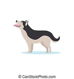 heiser, vektor, sibirisch, abbildung, hund