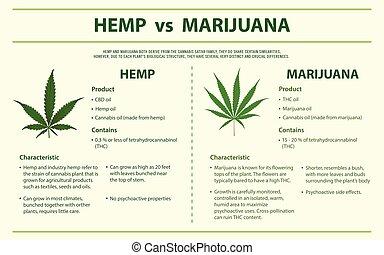Hemp vs Marihuana vertikal infographic.