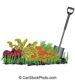 Herbst-Ernte-Gemüse auf Gras und Schaufel