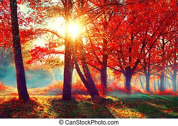 Herbst. Fallen Naturszene. Schöner Herbstpark