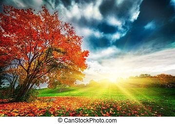 Herbst, Herbstlandschaft im Park