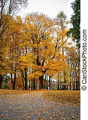 Herbst im Park mit gelben Blättern am Boden.
