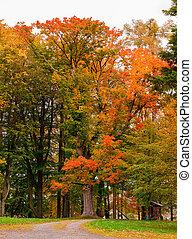 Herbst im Park mit gelben und orangen Blättern