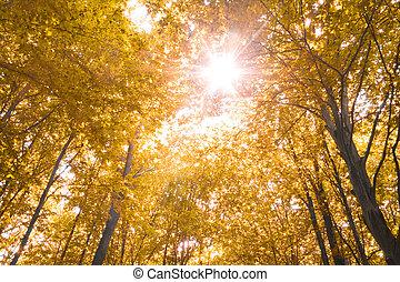 Herbst Natur