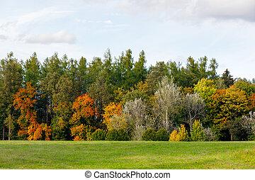 Herbstbäume mit gelben und orangen Blättern