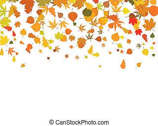 Herbstblätter.