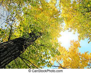 Herbstfoliage