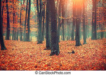 Herbstlandschaft, Bäume und Blätter. Fall Szene