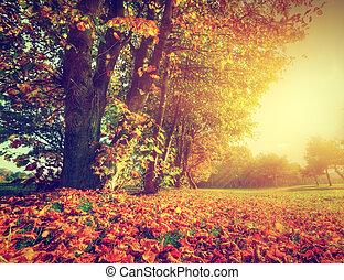 Herbstlandschaft im Park