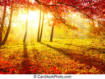 Herbstpark. Herbstbäume und Blätter. Fallen