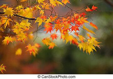 Herbstrot und gelbe Ahornblätter.