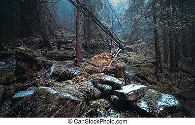 Herbsttag in den Wald