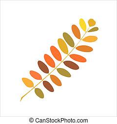 Herbstzweig Acacia