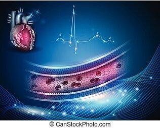 herz, abschnitt, normal, gesunde, kardiogramm, kreuz, koerperbau, arterie