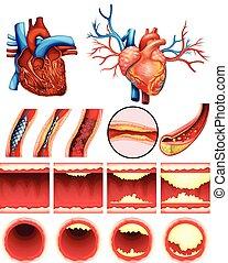 Herz Cholesterin.