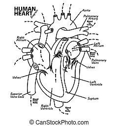 herz, diagramm, koerperbau, menschliche , t�towierung