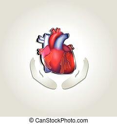 herz, symbol, gesundheit, menschliche , sorgfalt