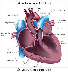 Herzkreuz-Sektion gekennzeichnet