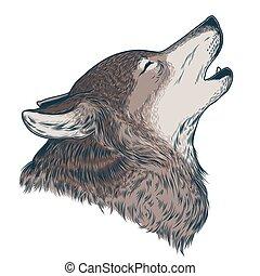 heulen, vektor, wolf, abbildung