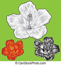 Hibiscus-Blumenblüten-Varianten