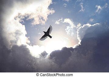 himmel, vogel, engelchen