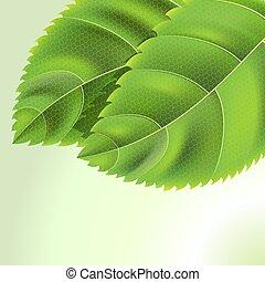 hintergrund, blätter, grün, bio, tropfen