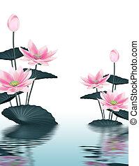 hintergrund, lotos