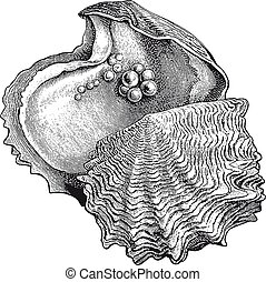 Hochauflösende Austernperlengravur.