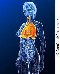 Hochgradige Lunge