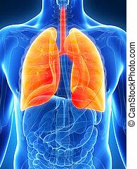Hochgradige männliche Lunge
