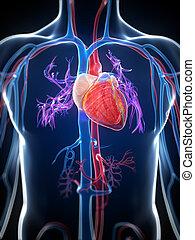 Hochgradiges menschliches Herz