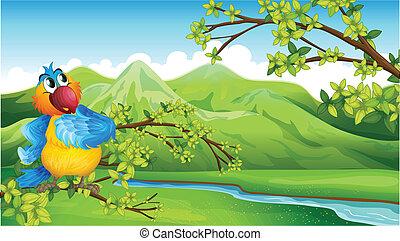 hohe berge, papagai, front