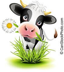 Holstein-Kuh im Gras