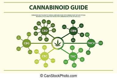 horizontal, cannabinoid, führer, infographic
