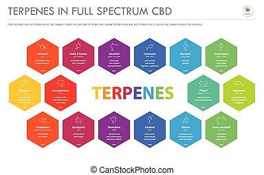 horizontal, infographic, formeln, geschaeftswelt, voll, strukturell, terpenes, cbd, spektrum