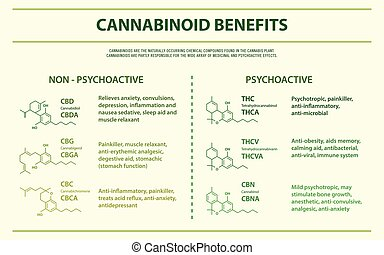 horizontal, vorteile, cannabinoid, infographic