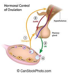 Hormongesteuerte Ovulation