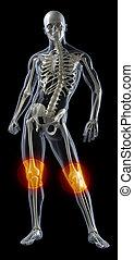 Humanes Knie, medizinischer Scan.