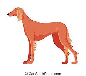 hund, purebred, tier, haustier, windhund, abbildung, seitenansicht, vektor